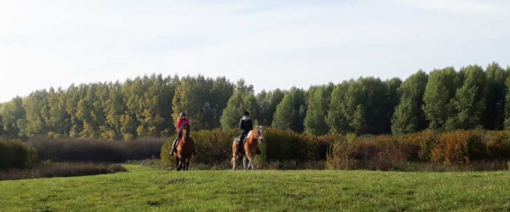 Therapie en Coaching met paarden